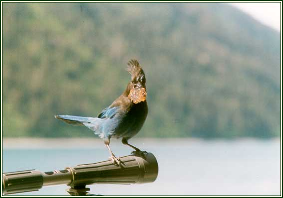 Birdwatching in Anchorage | Visit Anchorage